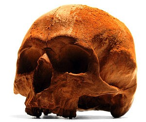 Anatomically Correct Chocolate Skull