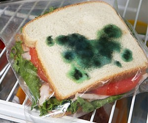 Anti-Theft Moldy Sandwich Bag