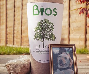 Biodegradable Pet Urn Tree Kit