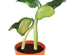 break-up-beanstalk
