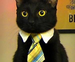 Business Cat Tie