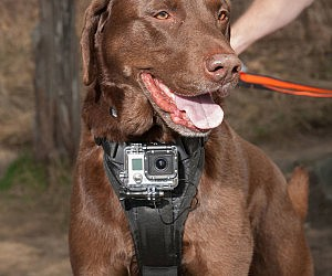 Action Camera Dog Harness