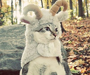 Sheep Pet Costume