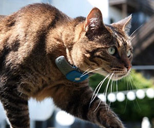 Cat GPS Tracking Collar