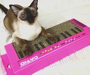cat-scratcher-keyboard