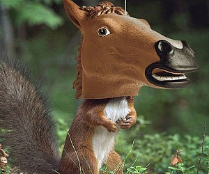 Creepy Horse Head Squirrel Feeder