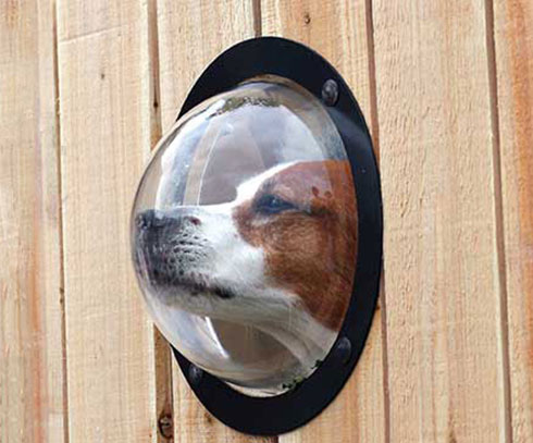 dog-peek-fence-window