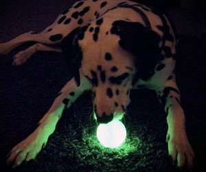 Glow In The Dark Dog Ball