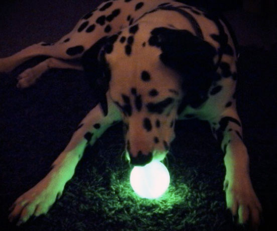 glow-in-the-dark-dog-ball-toy