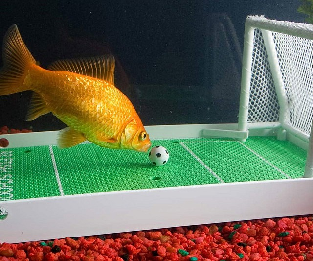 goldfish-soccer-game-training-kit