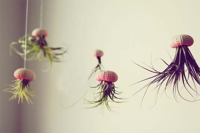 Hanging Jellyfish Plant
