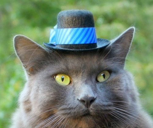 Hats For Cats