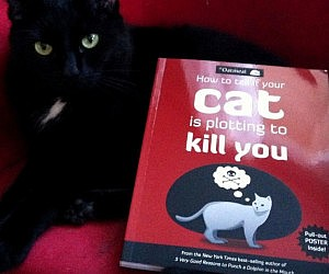 Your Cat Is Plotting To Kill You Book