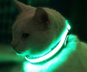 Illuminated Pet Collar