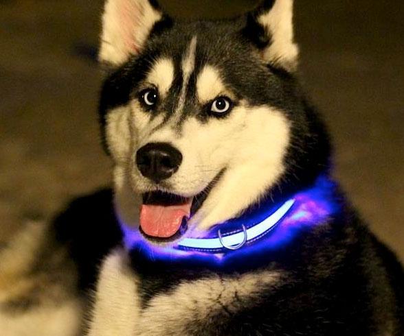 Illunimated Pet Collar