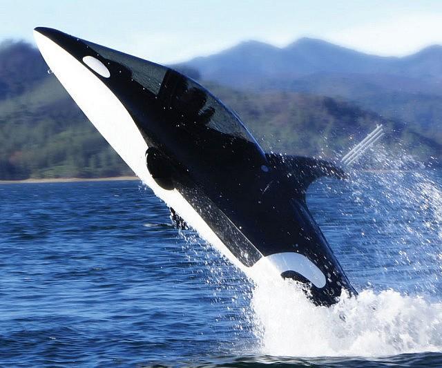 killer-whale-submarine