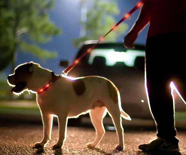 led-dog-leash