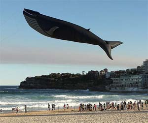 Life Size Whale Kite