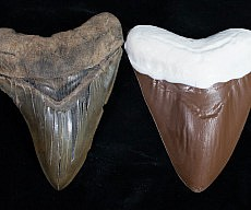 Chocolate Megalodon Shark Tooth