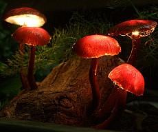 DIY Mushroom Lamps
