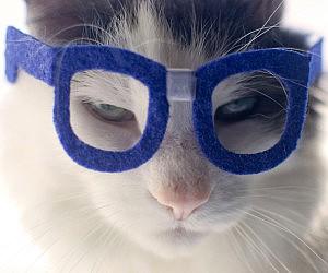 Nerd Glasses For Cats
