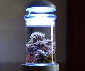 Miniature Salt Water Aquarium
