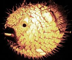 Puffer Fish Hanging Light