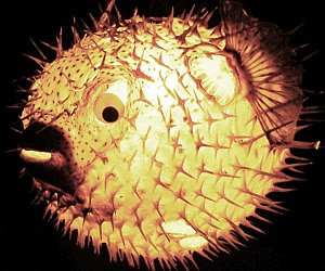 puffer-fish-lamp