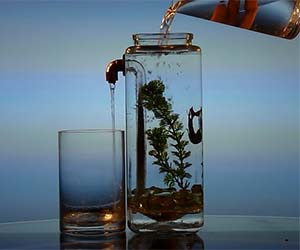 self-cleaning-aquarium