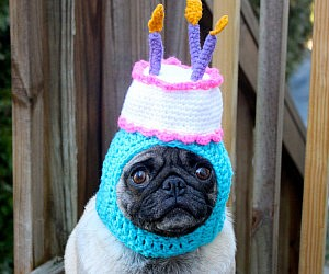 Silly Dog Hats