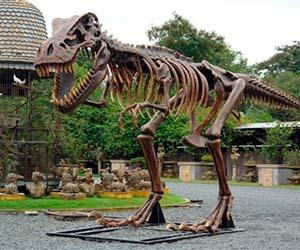 Life Size T-Rex Exhibit