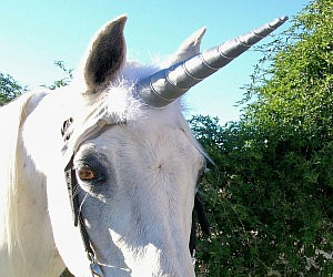 Unicorn Horn Horse Attachment