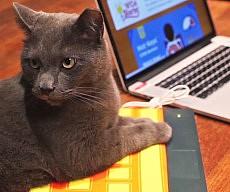 Heated Keyboard Cat Bed
